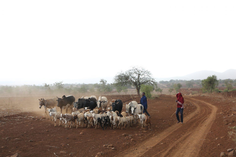 Tanzania boeren farmer field school hartslag artikel